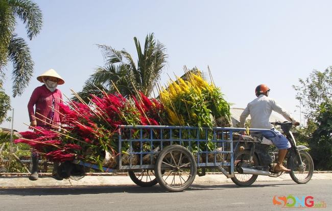 Xe ba gác hoa đang ngược xuôi quanh làng.